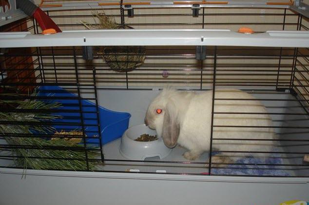 Фотография клетки для декоративного кролика