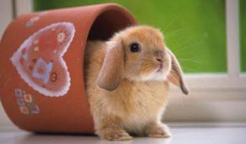 Сколько и чем кормить декоративного кролика — подбираем рацион