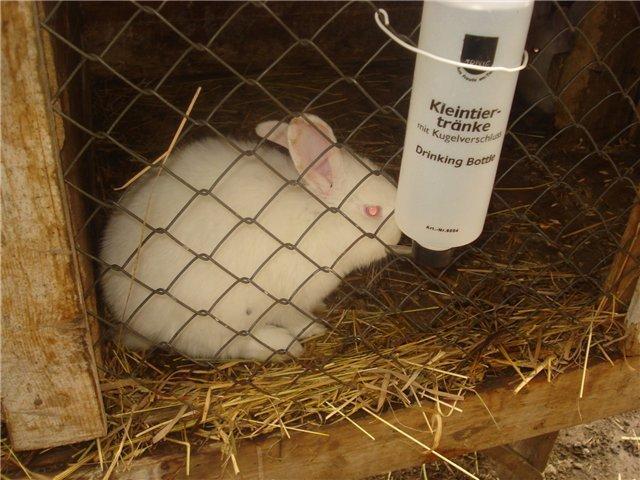 На изображении показано расположение поилки для кролика