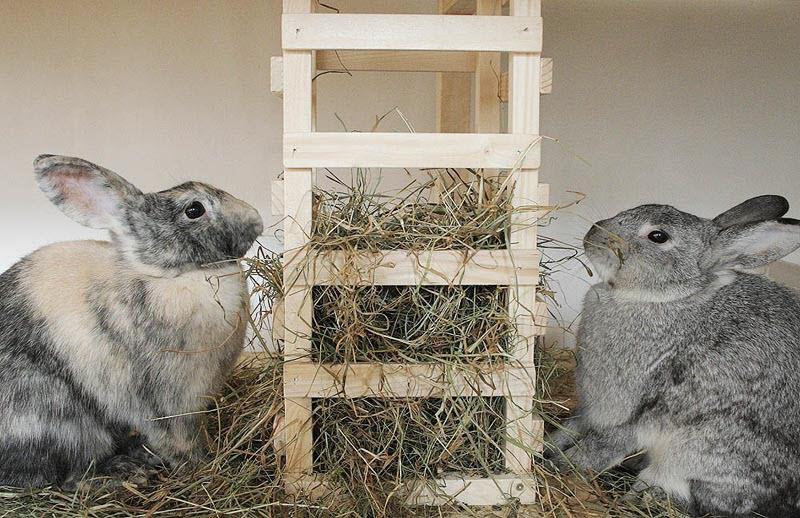 Снимок кормления декоративных кроликов в домашних условиях