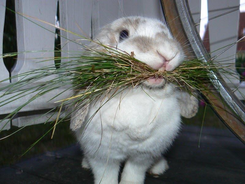 На фото показано что едят кролики
