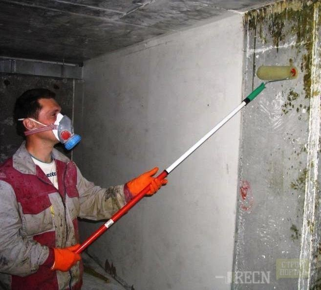 Как убрать плесень на стенах в квартире навсегда