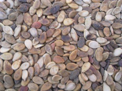 Снимок семян арбуза