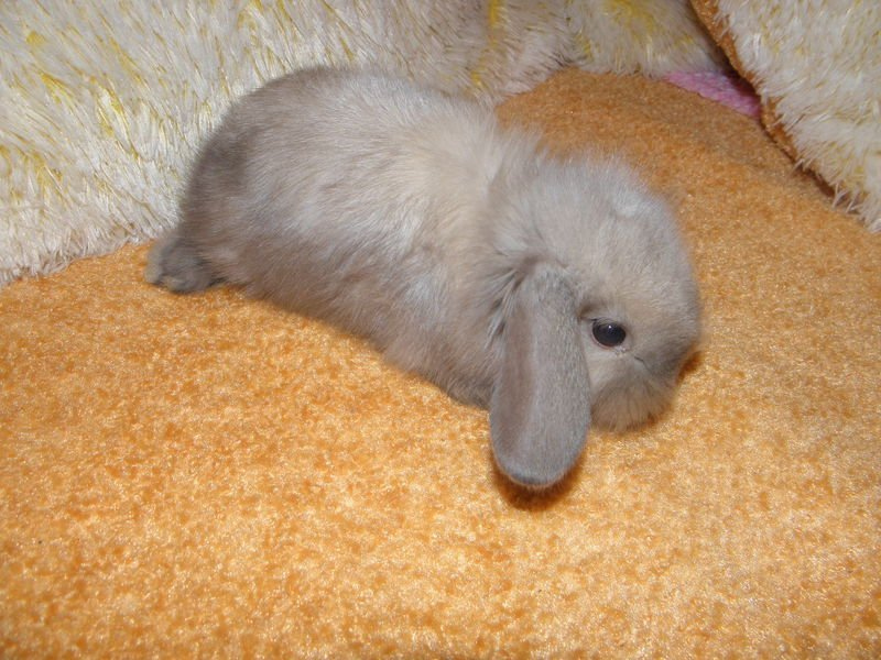 Уход за декоративным кроликом в домашних условиях для начинающих