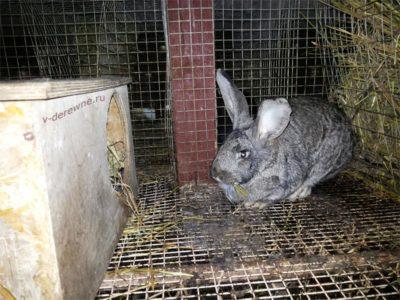 На снимке крольчиха