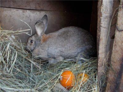 На снимке крольчиха в клетке