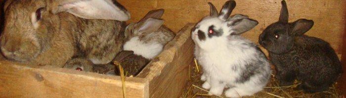 На фотографии семья кроликов