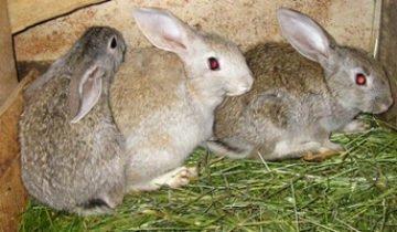 Почему крольчиха съедает крольчат — причины и меры предотвращения