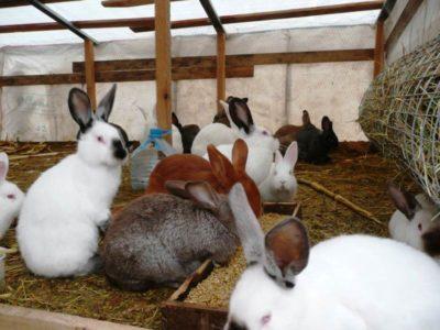Выращивание кроликов - выгодный бизнес, не требующий больших вложений