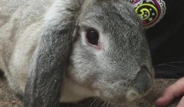 Основные болезни кроликов и целесообразное их лечение