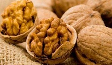 Грецкие орехи — польза и вред знаменитого лакомства