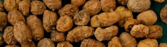 Фото земляного ореха