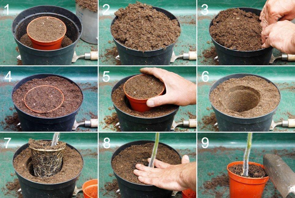 Процесс перевалки растения