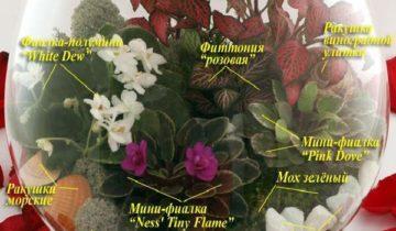 элементы для флорариума