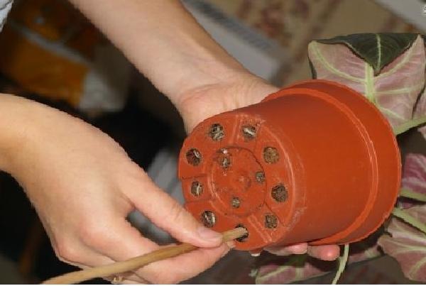 Выталкивание растения из старого горшка