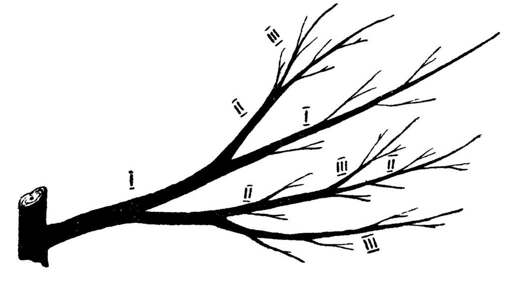 Правильная закладка маточных ветвей