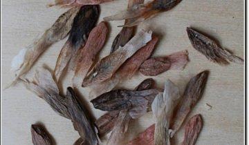 Семена плюмерий разных сортов