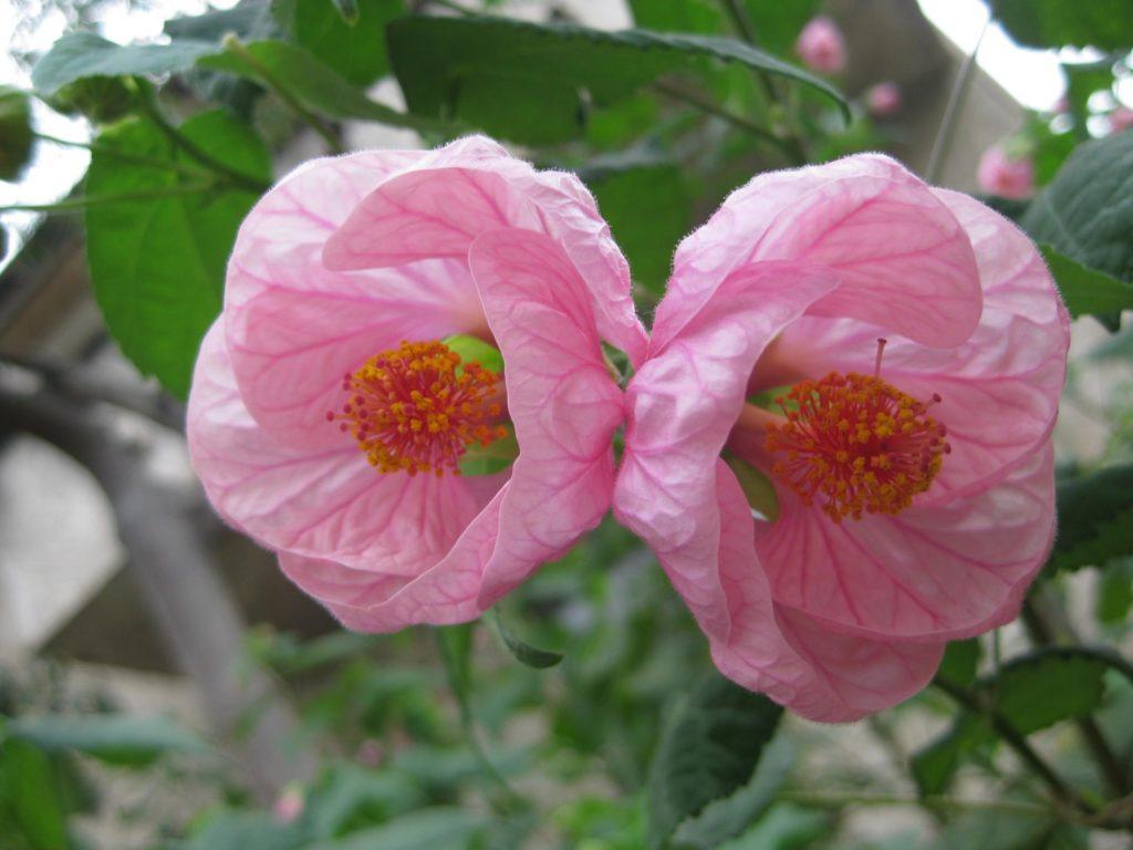 Комнатные цветы каталог с фотографиями и названиями