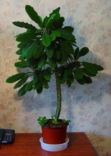 Растение после регулярных подкормок