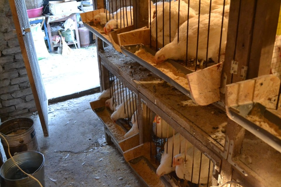 Курятник на 7 курочек своими руками фото - Zvezdasib.ru