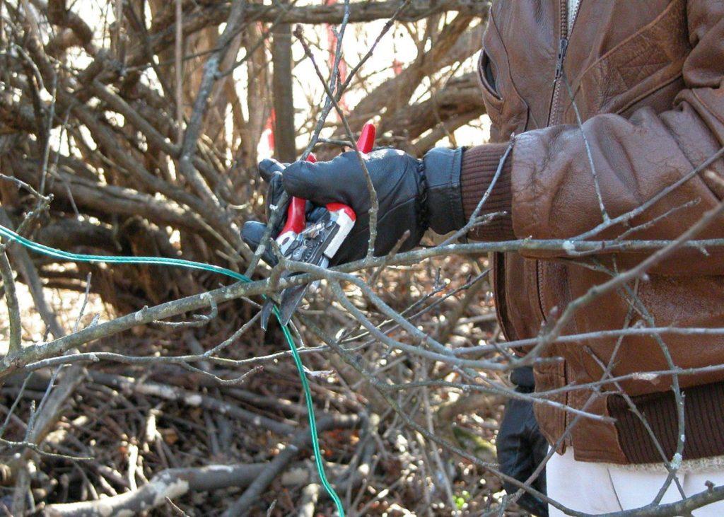 Садовник обрезает дерево