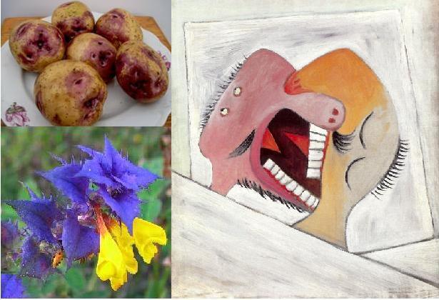 Картофель Лимонка: описание сорта, фото, характеристика ...
