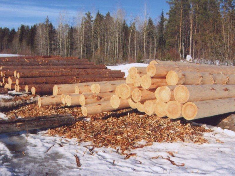 Строевой зимний лес