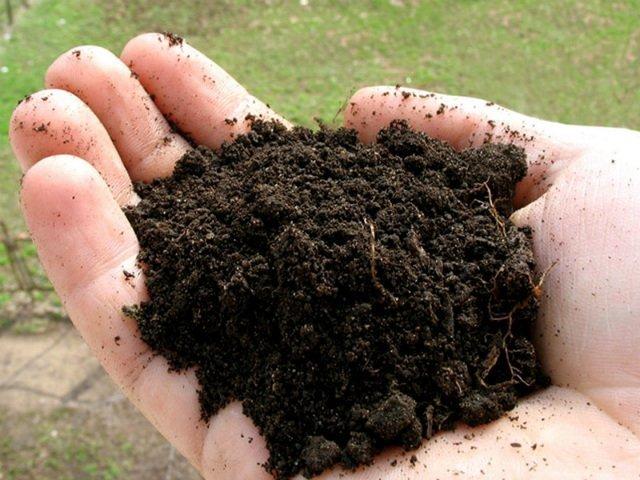 Дерновая земля для рассады