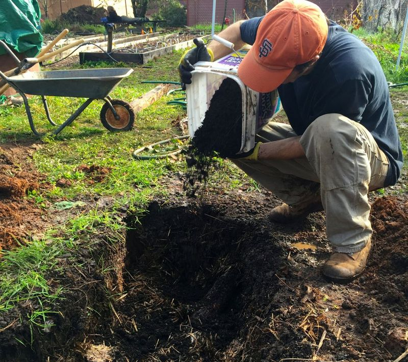 Подготовка лунки для посадки малины