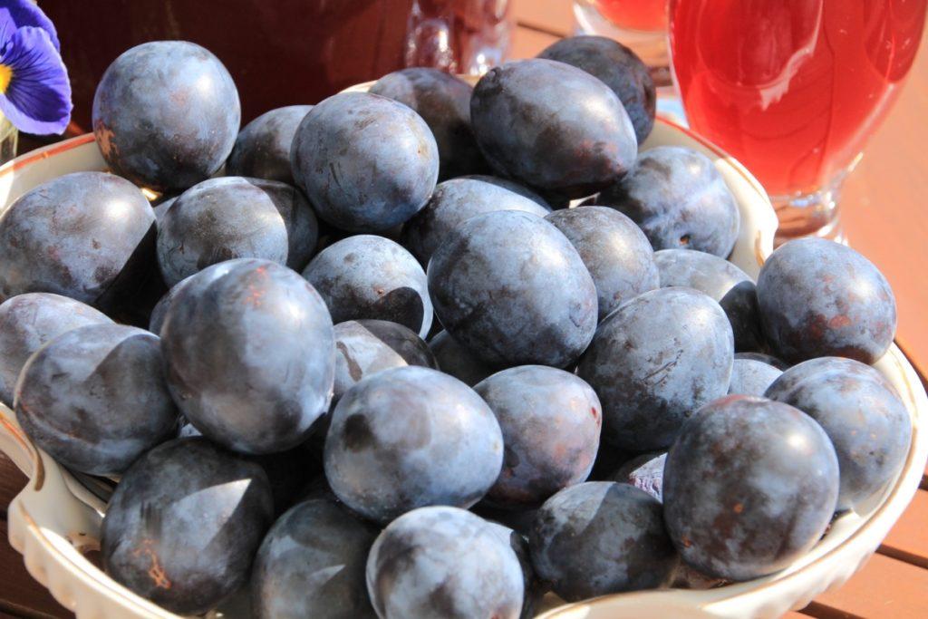 Плоды сливы Тульская чёрная
