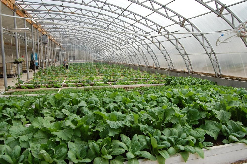 Выращивание культур внутри вегетария