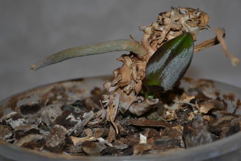 Детка на погибшей орхидее