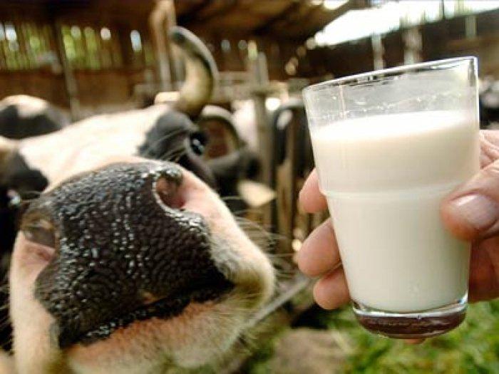 Молоко любимой дойки