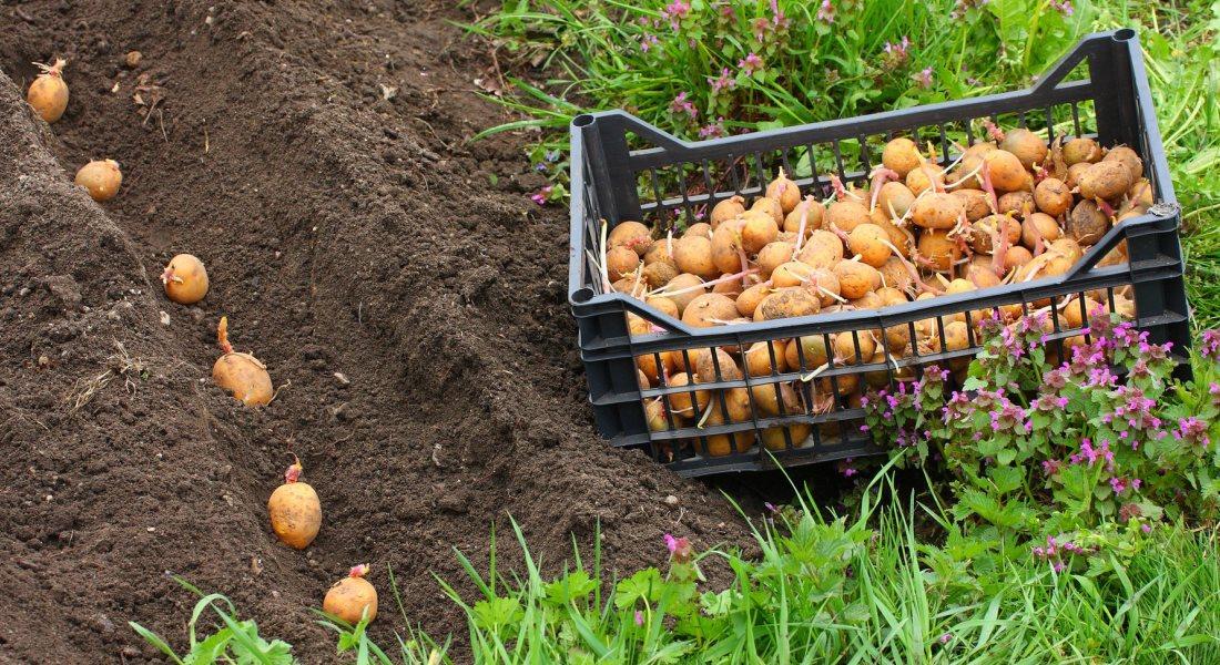 Подготовка почвы под картофель. Подготовка почвы для посадки картофеля весной