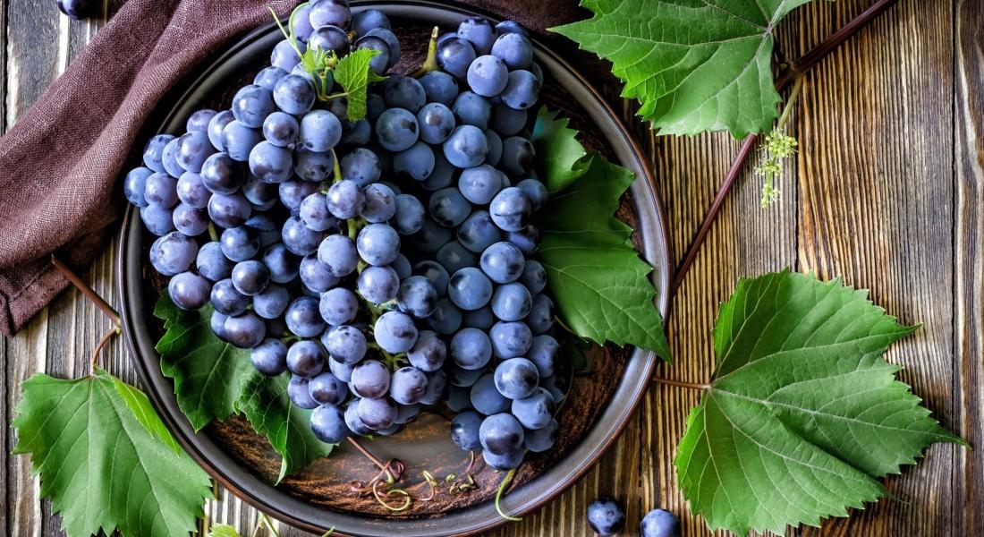 Как утеплить виноград на зиму: как укрыть, как подготовить, как обрезать. Обработка винограда осенью
