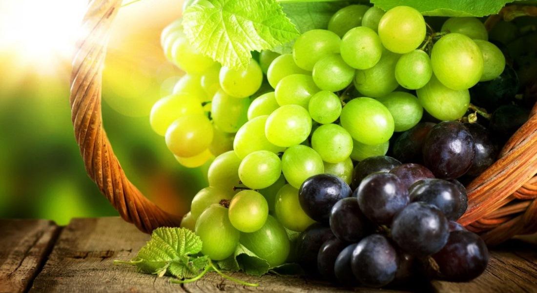 Как пересадить черенок винограда на постоянное место