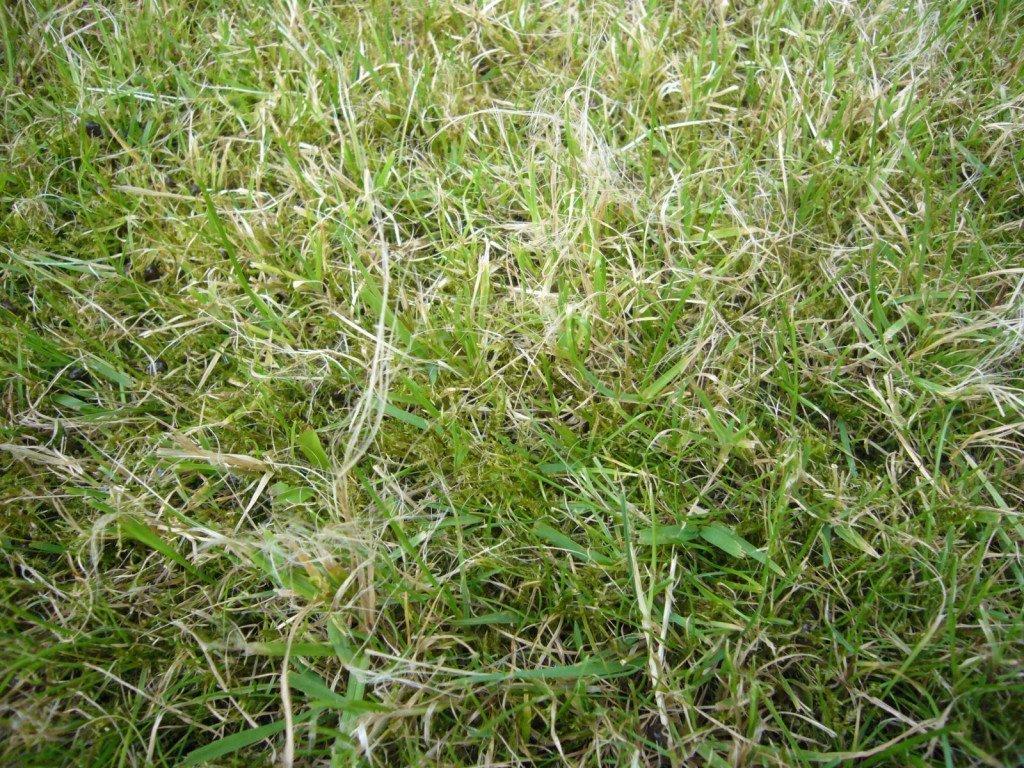 стал трава скошена картинка фотоснимке