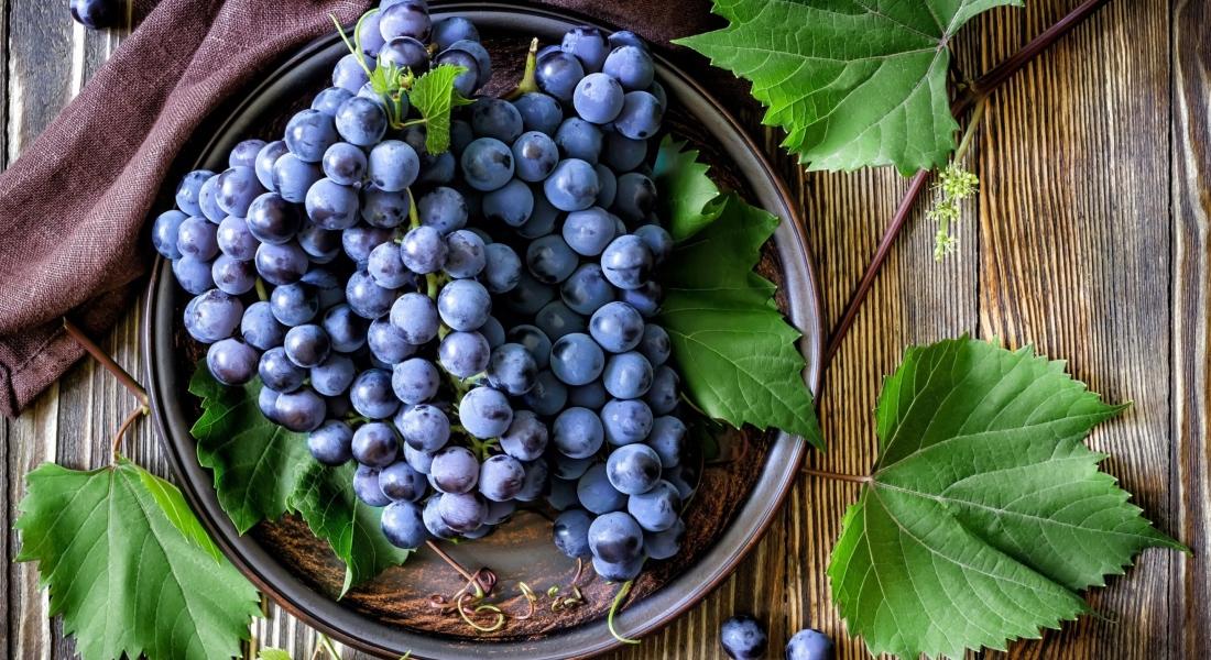 Советы садоводам как правильно посадить виноград весной