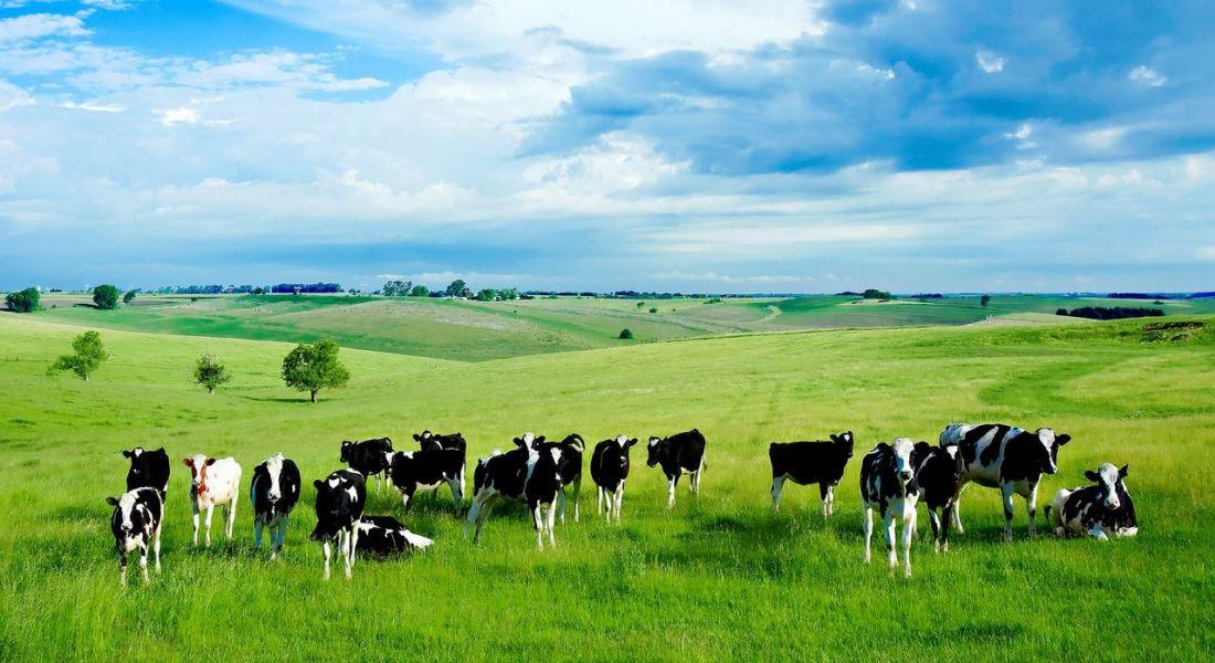 Лечение коров - лечение и профилактика заболеваний, правила успешного фермерского хозяйства