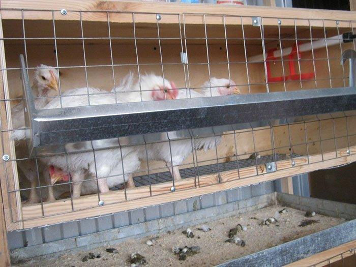 Клетки для куриц-несушек своими руками. Размеры клетки для 13