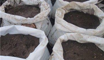 Выращивание шампиньонов в домашних условиях для новичков