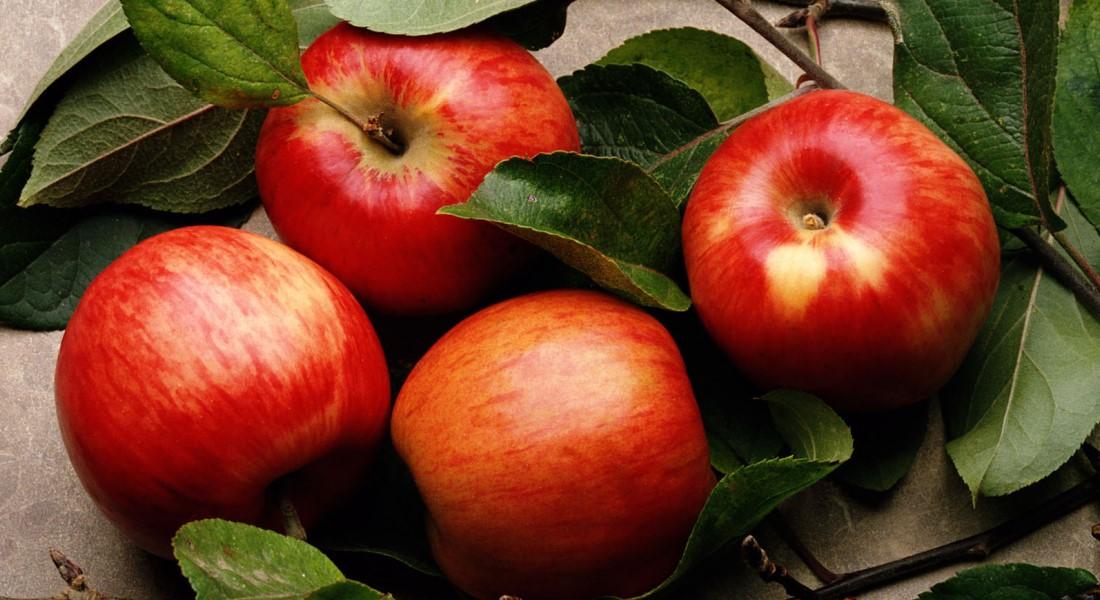 Лучшие сорта яблонь на кубани