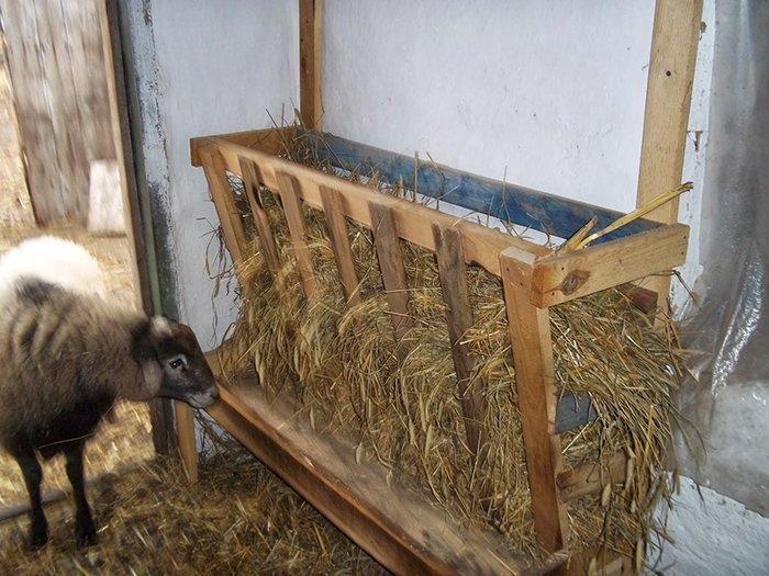 Кормушки для овец своими руками видео фото 837