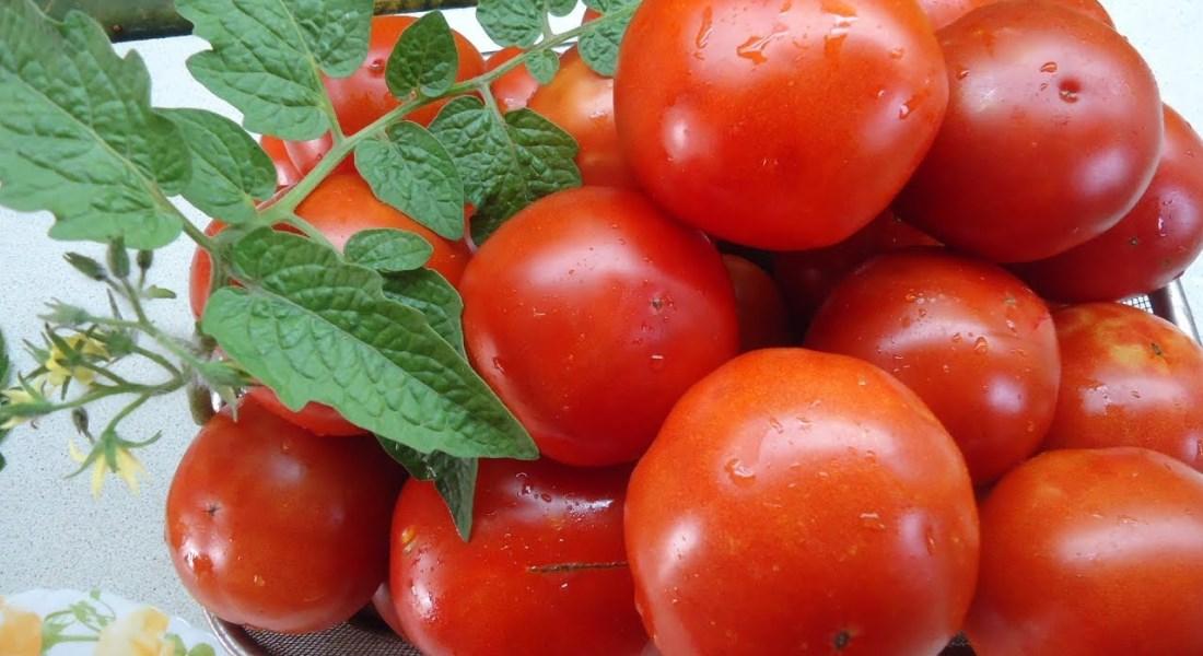 Томат Санька - основные свойства и особенности раннего сорта томатов в фото и видео
