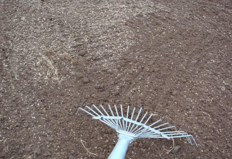 На изображении посадка газона осенью