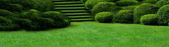 Возможна ли посадка газона в осенний период