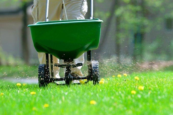 На изображении показан процесс удобрения газона