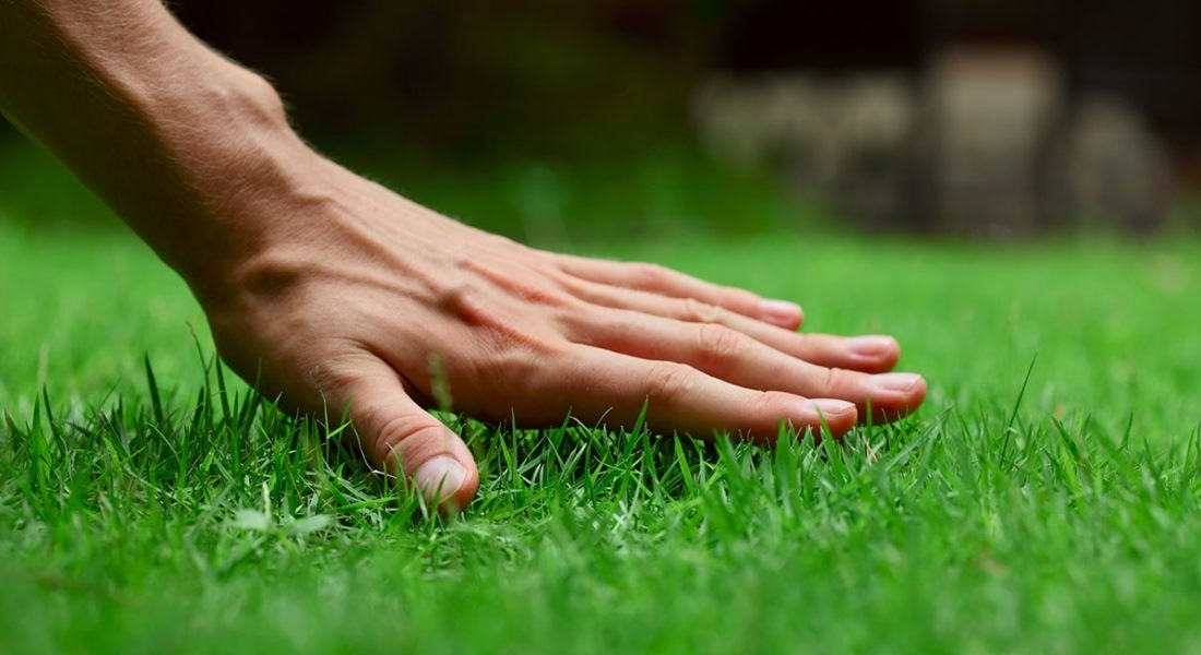 Удобрения для газона осенью и весной