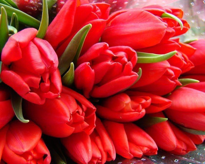через несколько картинки с красными тюльпанами потолочной люстры