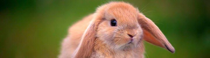 Как правильно кормить декоративного кролика - Кормление кроликов